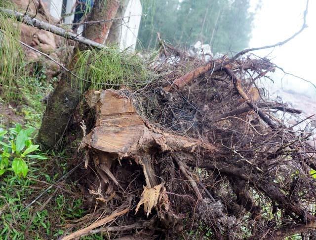 Nhiều sai phạm tại các ban quản lý rừng phòng hộ ở Nghệ An - 2