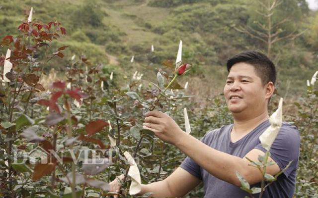 Bỏ phố lên núi trồng hoa, trai Hà Nội kiếm nửa tỷ đồng mỗi năm - 1