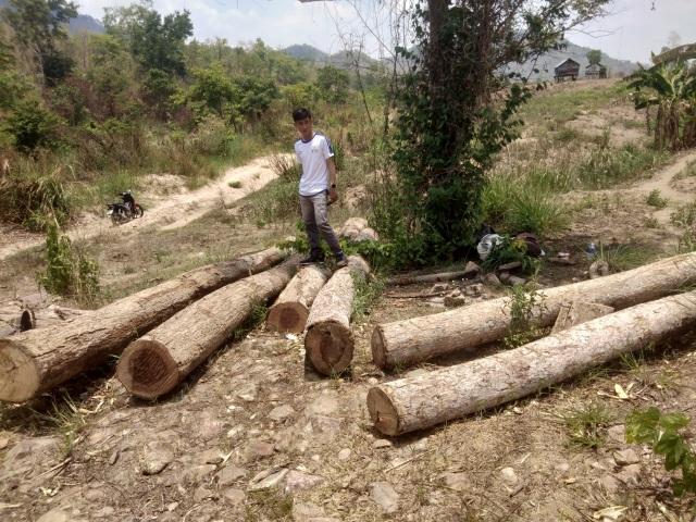 """Những khoảnh rừng bị """"cạo trọc"""" trong vùng giáp ranh Ia Pa tại Gia Lai - 1"""