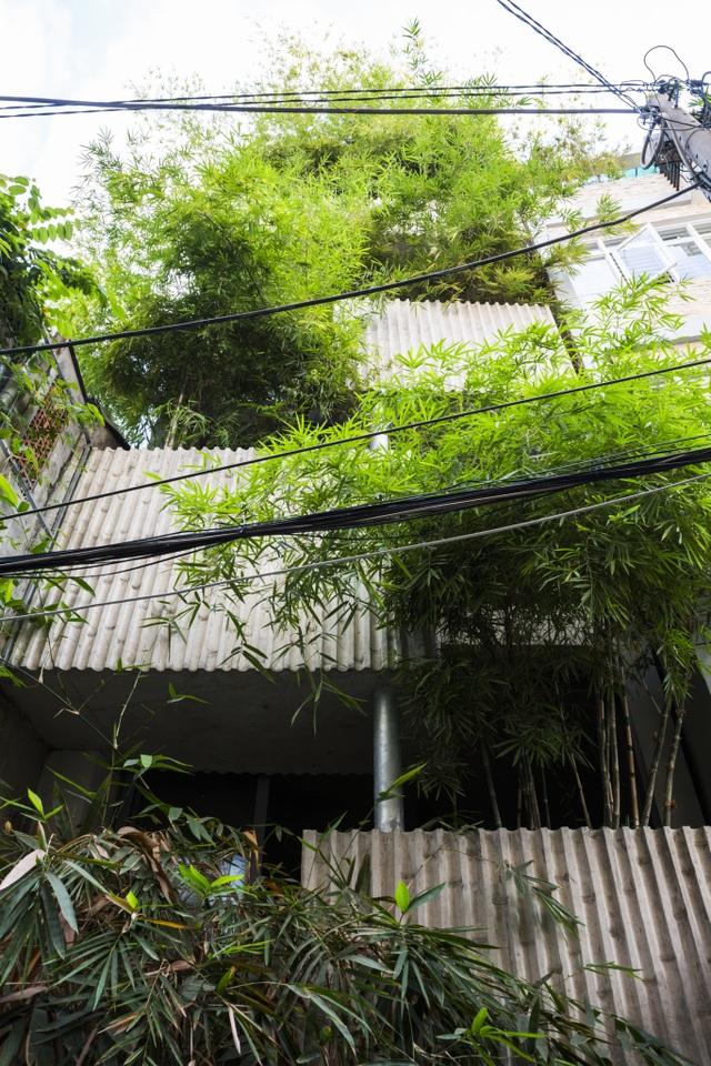 Nhà cây độc đáo ở TPHCM, mỗi buổi sáng chim hót líu lo như trong rừng - 2