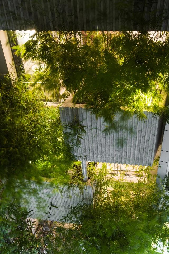 Nhà cây độc đáo ở TPHCM, mỗi buổi sáng chim hót líu lo như trong rừng - 11