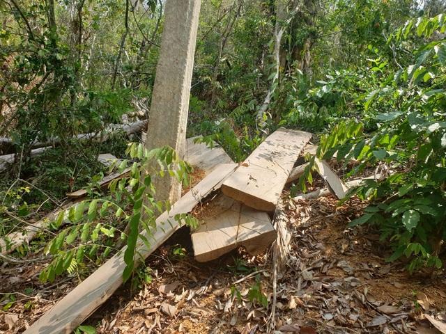 Rừng giáp ranh Đắk Lắk - Gia Lai bị tàn phá đáng báo động - 3