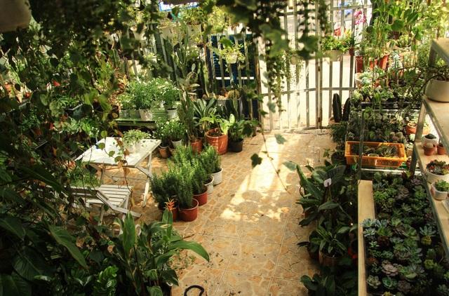 Người mẹ Đà Nẵng chăm chút khu vườn 18m2 đẹp như mơ tặng con trai - 1