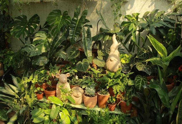 Người mẹ Đà Nẵng chăm chút khu vườn 18m2 đẹp như mơ tặng con trai - 4