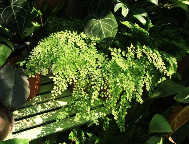 Người mẹ Đà Nẵng chăm chút khu vườn 18m2 đẹp như mơ tặng con trai - 5