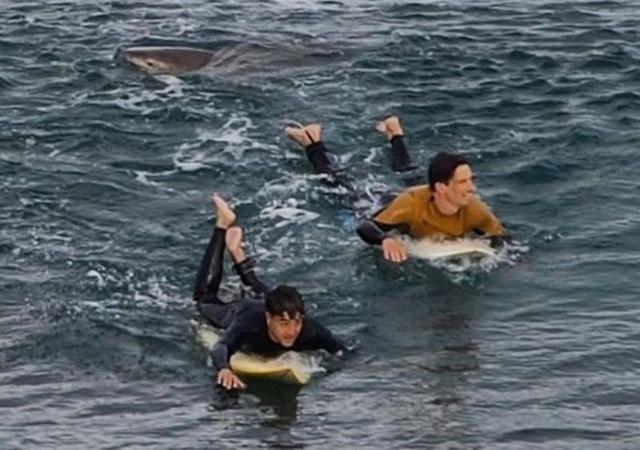Thoát chết trong gang tấc nhờ đấm liên tiếp vào cá mập - 2