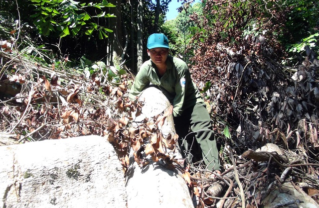 """Vụ """"lâm tặc"""" mở đường phá rừng ở Phú Yên: La liệt gỗ bị bỏ lại hiện trường! - 4"""