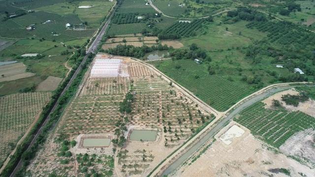 Choáng với dàn trái cây ngoại 'chỉ trời Tây mới có' được trồng hữu cơ tại Bình Thuận - 1