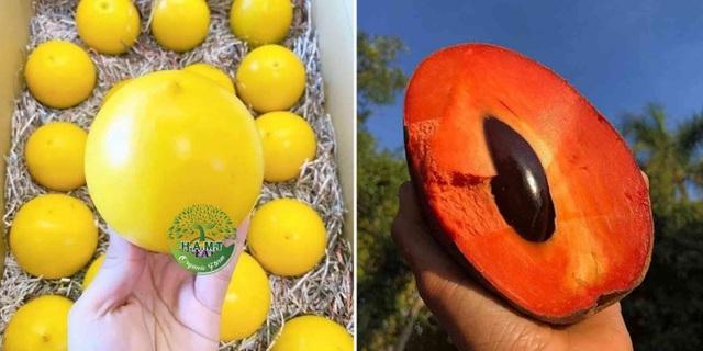 Choáng với dàn trái cây ngoại 'chỉ trời Tây mới có' được trồng hữu cơ tại Bình Thuận - 2