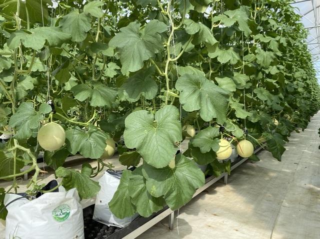 Choáng với dàn trái cây ngoại 'chỉ trời Tây mới có' được trồng hữu cơ tại Bình Thuận - 3
