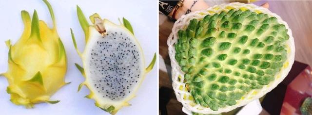 Choáng với dàn trái cây ngoại 'chỉ trời Tây mới có' được trồng hữu cơ tại Bình Thuận - 6