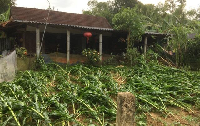 Cận cảnh cả trăm ngôi nhà tan hoang sau trận lốc xoáy - 2