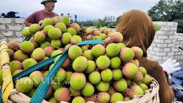 Quảng Ninh: Bội thu vải chín sớm, thương lái kéo về mua nườm nượp, nông dân thu tiền tỷ - 1