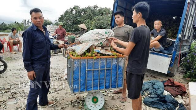 Quảng Ninh: Bội thu vải chín sớm, thương lái kéo về mua nườm nượp, nông dân thu tiền tỷ - 2