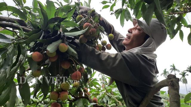 Quảng Ninh: Bội thu vải chín sớm, thương lái kéo về mua nườm nượp, nông dân thu tiền tỷ - 4