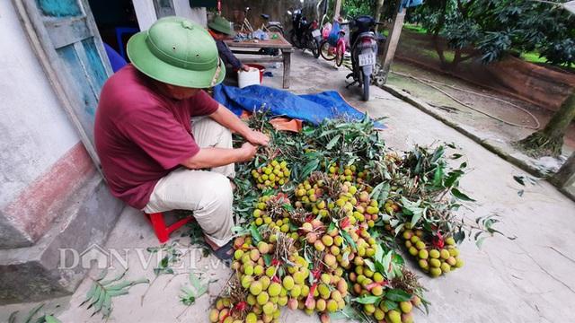Quảng Ninh: Bội thu vải chín sớm, thương lái kéo về mua nườm nượp, nông dân thu tiền tỷ - 8