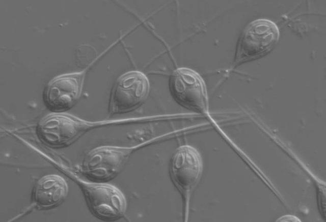 Tìm thấy sinh vật đầu tiên không cần ôxy để sống sót - 1