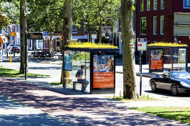 Hà Lan phủ xanh mái nhà chờ xe buýt cho loài ong trú ẩn - 1