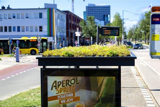 Hà Lan phủ xanh mái nhà chờ xe buýt cho loài ong trú ẩn - 2
