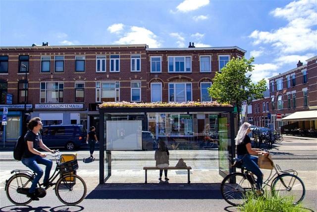 Hà Lan phủ xanh mái nhà chờ xe buýt cho loài ong trú ẩn - 3