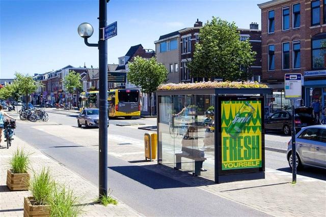 Hà Lan phủ xanh mái nhà chờ xe buýt cho loài ong trú ẩn - 4