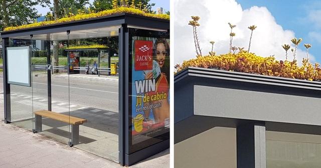 Hà Lan phủ xanh mái nhà chờ xe buýt cho loài ong trú ẩn - 5