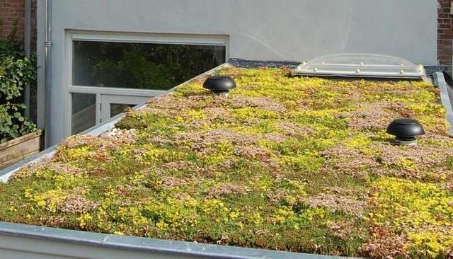 Hà Lan phủ xanh mái nhà chờ xe buýt cho loài ong trú ẩn - 6