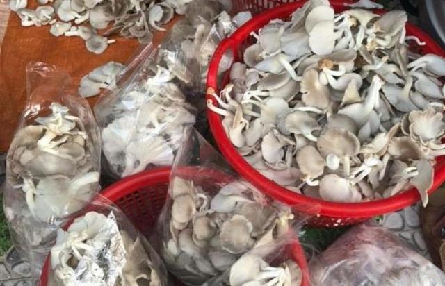 Quảng Nam: U40 xứ trồng nấm sò thu tiền rủng rỉnh quanh năm - 6