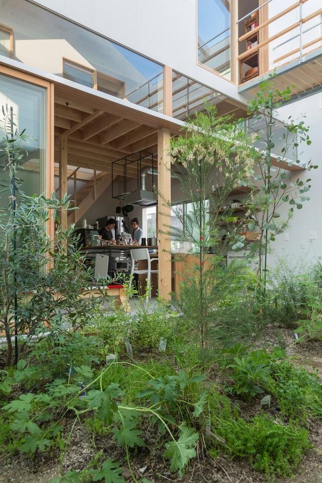 Ngôi nhà bên ngoài đơn giản, bên trong ẩn chứa cả vườn cây xanh mát - 6