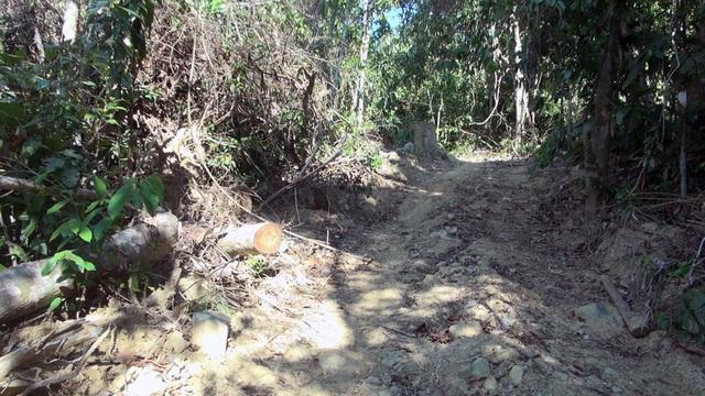 """Vụ """"lâm tặc"""" mở đường phá rừng ở Phú Yên: Chuyển cơ quan điều tra! - 5"""
