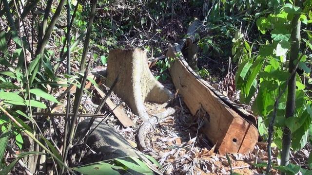 """Vụ """"lâm tặc"""" mở đường phá rừng ở Phú Yên: Chuyển cơ quan điều tra! - 3"""