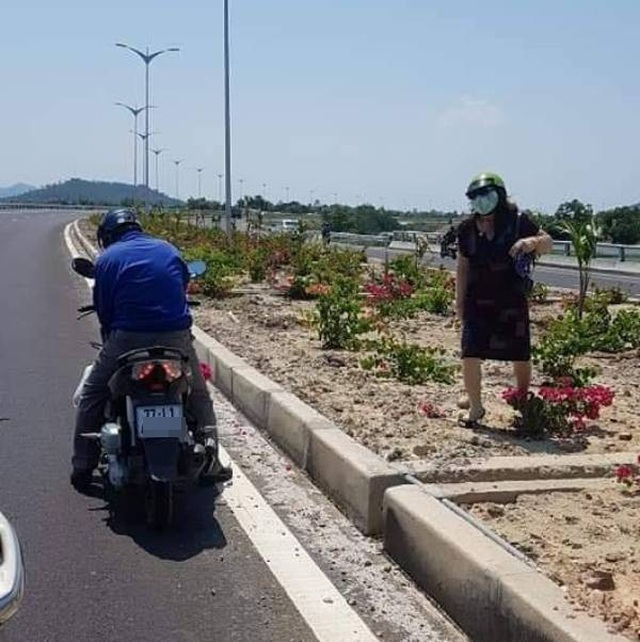 Hàng nghìn gốc hoa giấy trên quốc lộ 4.400 tỷ bị nhổ trộm - 3