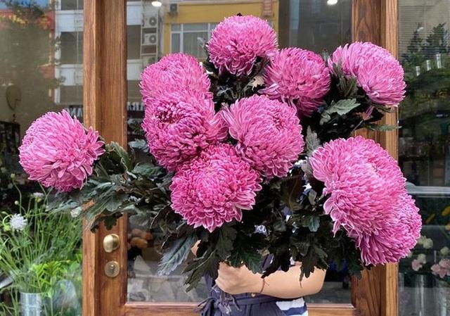 Hoa cúc xanh khổng lồ đắt gấp 20 lần hàng chợ có gì đặc biệt mà gây sốt? - 1
