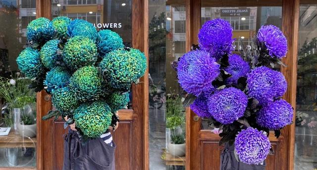 Hoa cúc xanh khổng lồ đắt gấp 20 lần hàng chợ có gì đặc biệt mà gây sốt? - 2