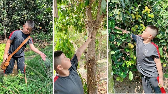 Vườn trái cây trĩu quả của gia đình diễn viên Lê Phươngở Tây Ninh - 4