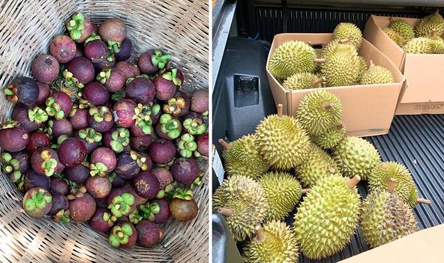 Vườn trái cây trĩu quả của gia đình diễn viên Lê Phươngở Tây Ninh - 3
