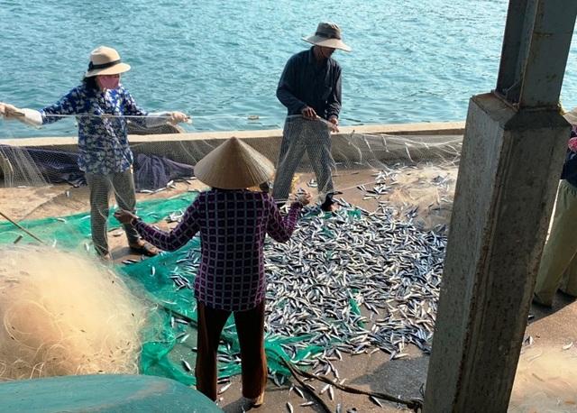 Bẫy tôm hùm biển, ngư dân kiếm chục triệu sau 2 đêm ra khơi - 3