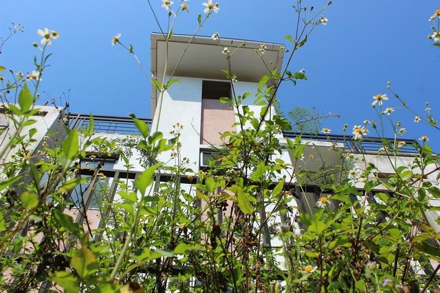 Hà Tĩnh: Hàng chục căn biệt thự hạng sang bỏ hoang giữa lòng thành phố - 6