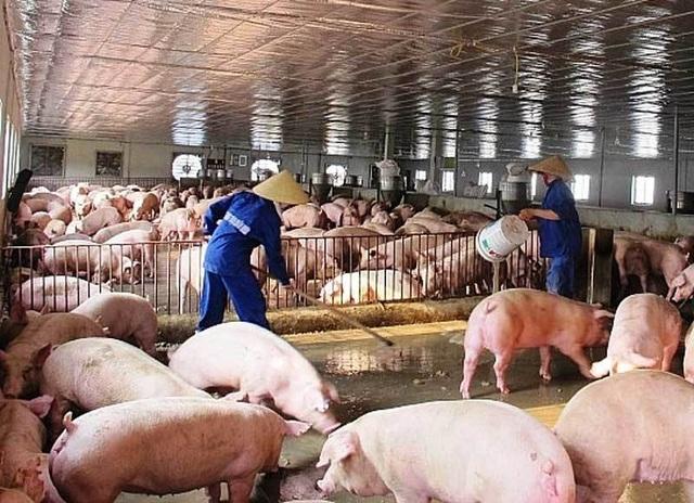 Tăng giá bất chấp cảnh báo, thịt lợn đắt đỏ chưa từng có - 1