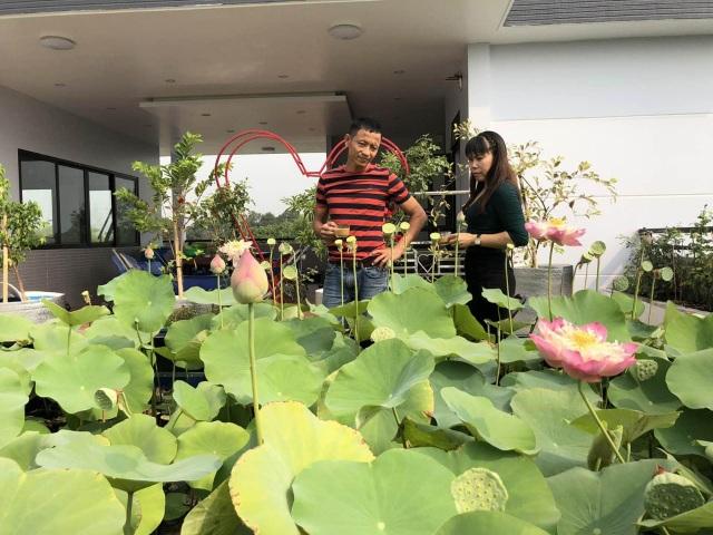 Doanh nhân 7x đào ao trồng sen đẹp hút hồn trên sân thượng 400m2 ở Sài Gòn - 3