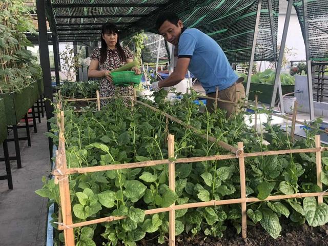 Doanh nhân 7x đào ao trồng sen đẹp hút hồn trên sân thượng 400m2 ở Sài Gòn - 11