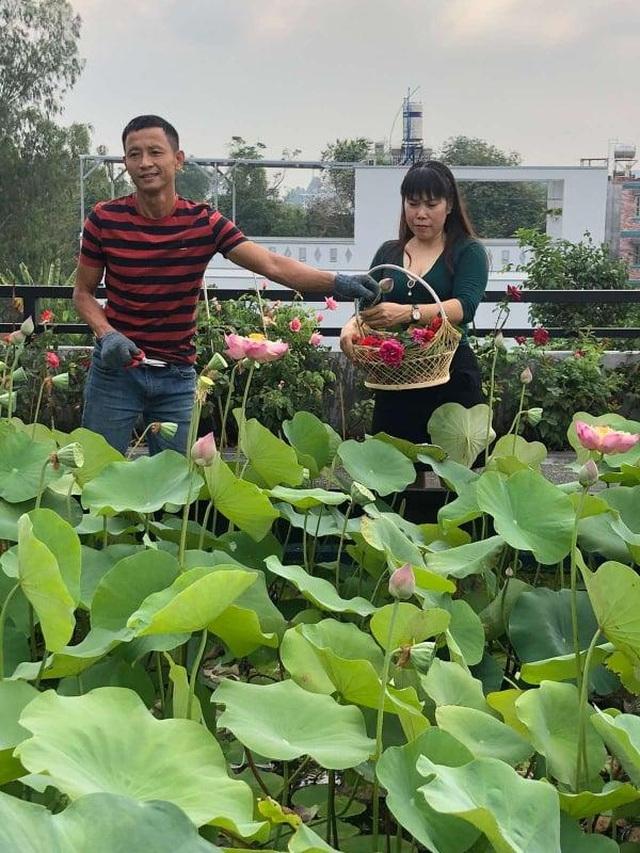 Doanh nhân 7x đào ao trồng sen đẹp hút hồn trên sân thượng 400m2 ở Sài Gòn - 8