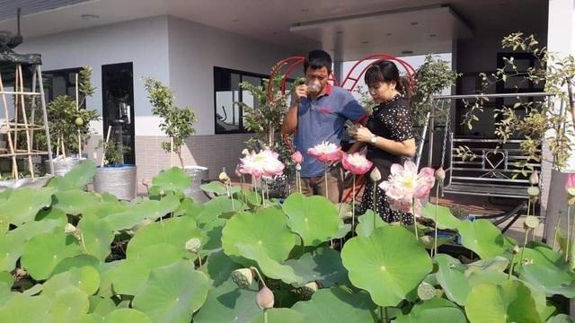 Doanh nhân 7x đào ao trồng sen đẹp hút hồn trên sân thượng 400m2 ở Sài Gòn - 9