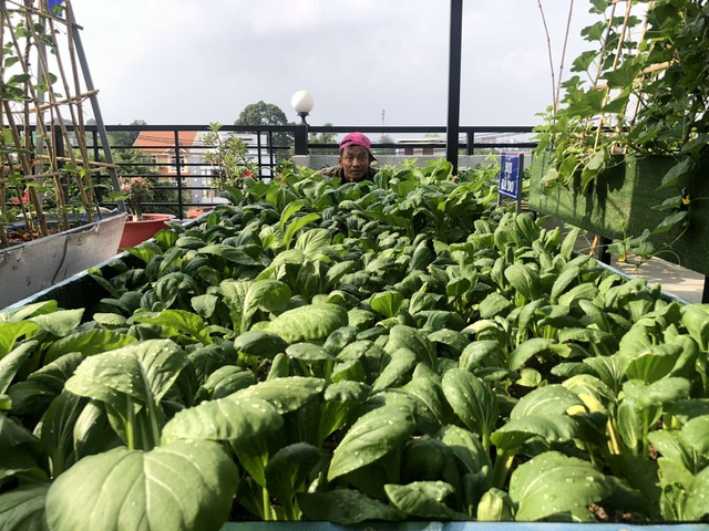 Doanh nhân 7x đào ao trồng sen đẹp hút hồn trên sân thượng 400m2 ở Sài Gòn - 13