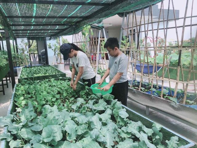 Doanh nhân 7x đào ao trồng sen đẹp hút hồn trên sân thượng 400m2 ở Sài Gòn - 10