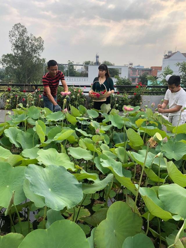Doanh nhân 7x đào ao trồng sen đẹp hút hồn trên sân thượng 400m2 ở Sài Gòn - 4