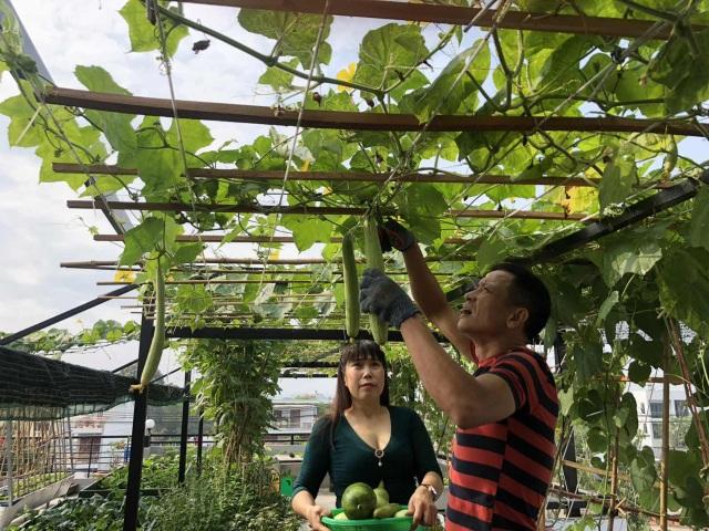 Doanh nhân 7x đào ao trồng sen đẹp hút hồn trên sân thượng 400m2 ở Sài Gòn - 14