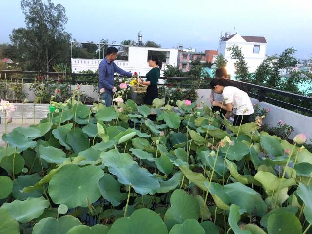 Doanh nhân 7x đào ao trồng sen đẹp hút hồn trên sân thượng 400m2 ở Sài Gòn - 1