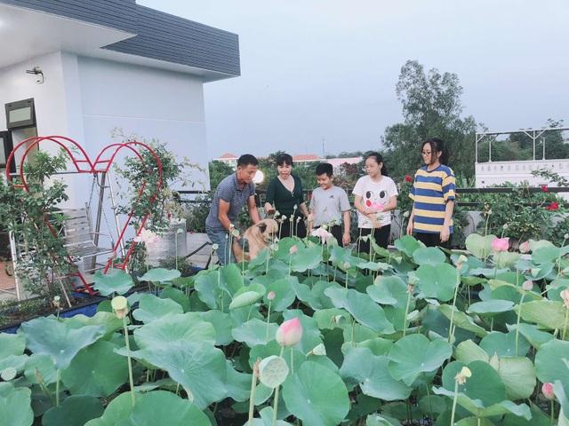 Doanh nhân 7x đào ao trồng sen đẹp hút hồn trên sân thượng 400m2 ở Sài Gòn - 6