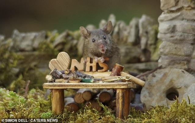 """Chiêm ngưỡng bộ ảnh gây sốt chụp """"ngôi làng của những chú chuột"""" - 12"""
